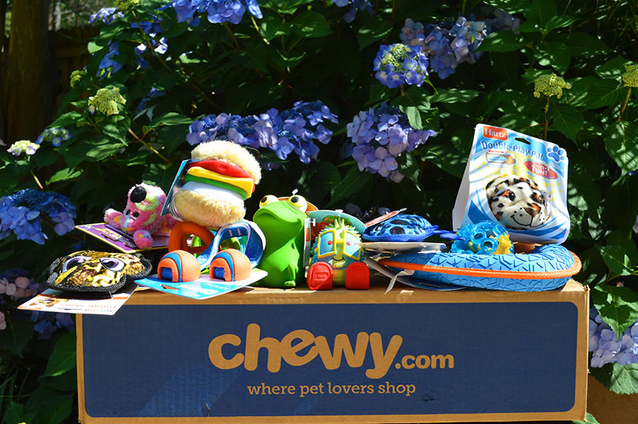 Chewy Toys & Treats